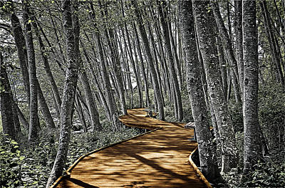 Park Scene Digital Art - Boardwalk In The Woods by Richard Farrington