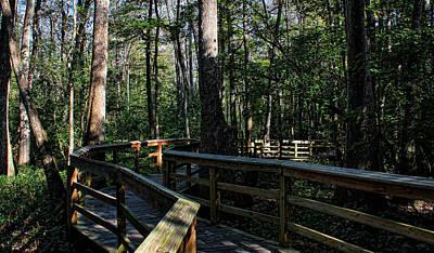 Photograph - Boardwalk Nature Walk by Judy Vincent