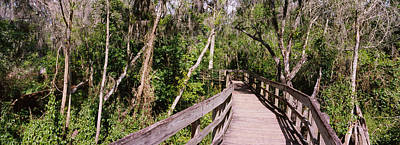 Lettuce Photograph - Boardwalk Passing Through A Forest by Panoramic Images