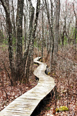 Path Photograph - Boardwalk Through The Woods by Brooke T Ryan