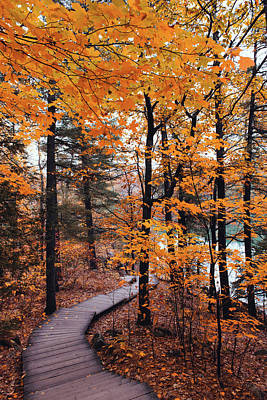 Gatineau Park Photograph - Boardwalk Trail In Autumn by Preappy