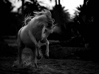 Dark Horse Photograph - Boast by Abdullah Al-saeed