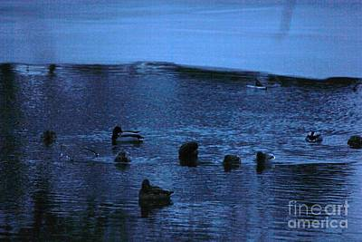 Photograph - Bobbing Ducks At Twilite by Bill Woodstock
