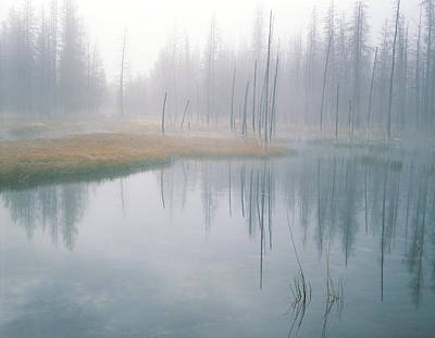 Bobby Sock Trees, Mist And Grass Art Print by Panoramic Images