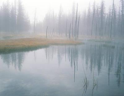 Bobby Sock Trees, Mist And Grass Art Print
