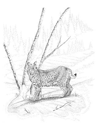 Drawing - Bobcat by Carl Genovese