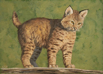 Wild Cat Painting - Bobcat Kitten by Crista Forest