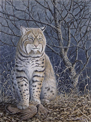 Bobcat Painting - Bobcat by Mike Stinnett