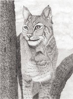 Bobcat Original