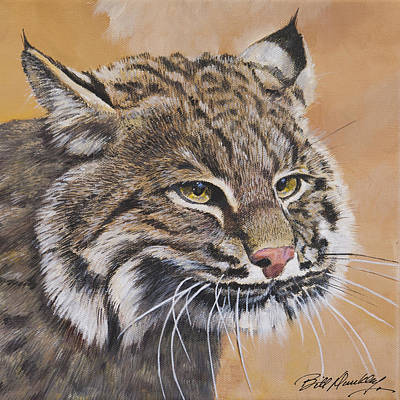 Bobcat Portrait Original