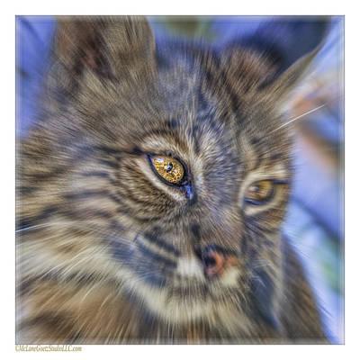 Bobcat Photograph - Bobcat Radial Blur by LeeAnn McLaneGoetz McLaneGoetzStudioLLCcom