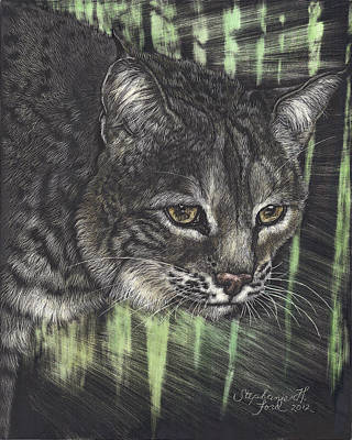 Bobcats Drawing - Bobcat Watching by Stephanie Ford