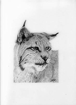 Bobcats Drawing - Bobcat by Wendy Brunell