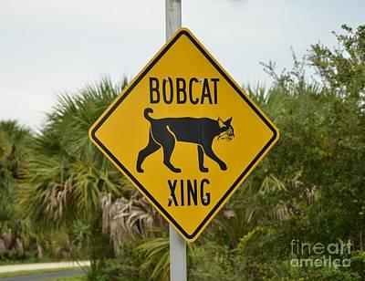 Photograph - Bobcat Xing by Bob Sample
