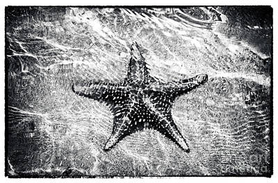 Photograph - Bocas Starfish  by John Rizzuto