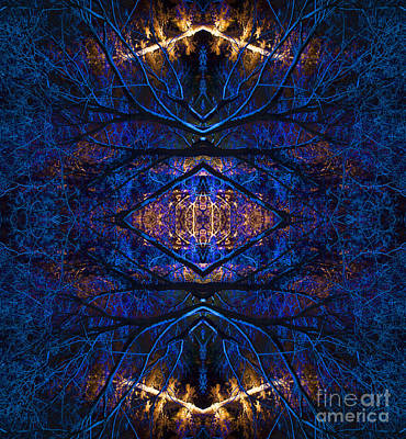 Enlightenment Wall Art - Photograph - Bodhi by Tim Gainey