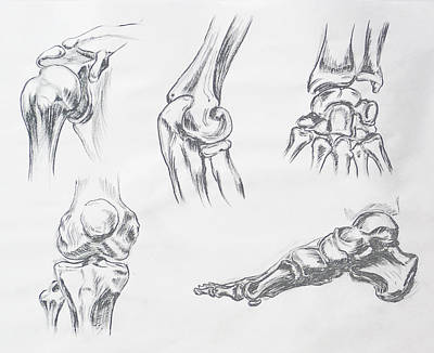 Drawing - Body Parts Anatomy Study by Irina Sztukowski