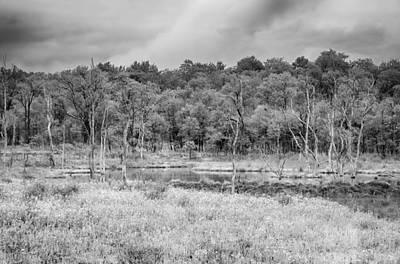 Photograph - Bog  7d07047b by Guy Whiteley