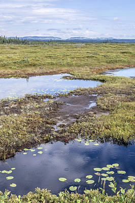 Photograph - Bogs And Tundra by Arkady Kunysz