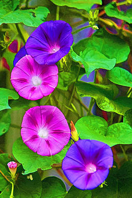 Painting - Bohemian Garden Morning Glory by John Haldane