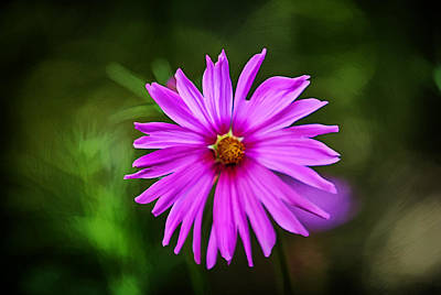 Painting - Bohemian Garden Pink by John Haldane