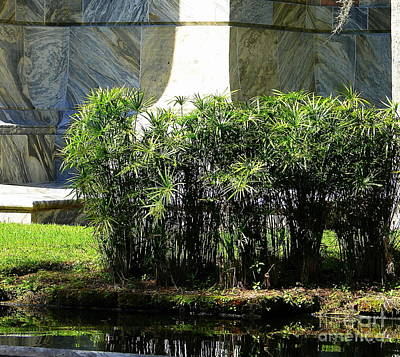 Photograph - Bok Tower Papyrus by Lew Davis