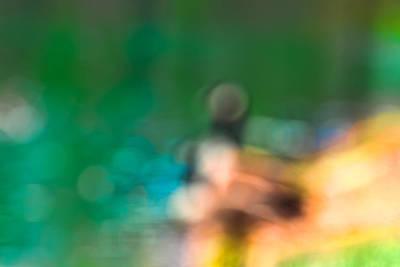 Photograph - Bokeh Duck by J Riley Johnson