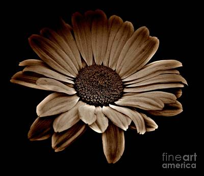 Mixed Media - Bold Daisy Sepia 1 by Chalet Roome-Rigdon