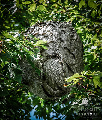 Photograph - Bold Faced Hornet's Hive by Grace Grogan