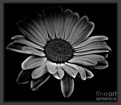Mixed Media - Bold Monochrome Daisy by Chalet Roome-Rigdon