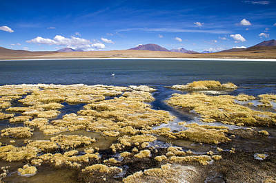 Photograph - Bolivia Desert Lagoon by For Ninety One Days