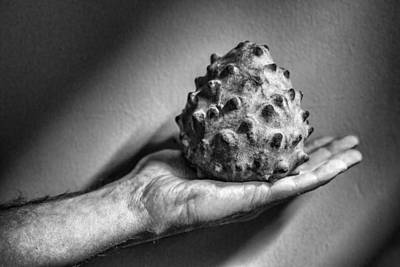 Cherimoya Photograph - Bolivian Chirimoya by For Ninety One Days