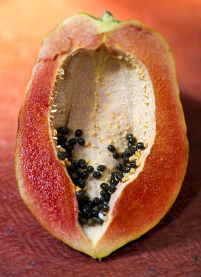 Photograph - Bolivian Papaya by For Ninety One Days