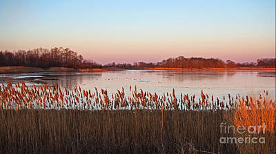 Photograph - Bombay Hook Sunrise by Robert Pilkington