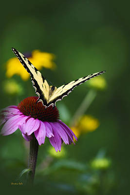 Photograph - Bon Voyage Butterfly by Christina Rollo