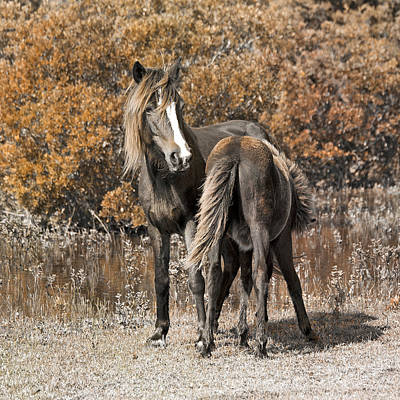 Foal Photograph - Bond by Betsy Knapp