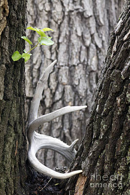 Photograph - Bone Tree by Alycia Christine