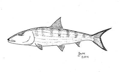 Bonefish Art Print by Jay Nicholas