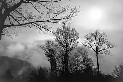 Photograph - Bones by Maria Robinson