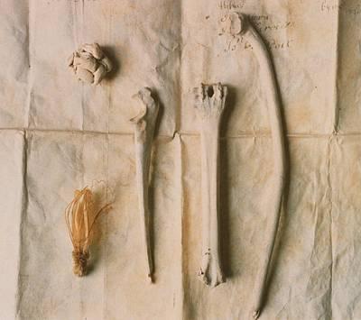 Photograph - Bones On Manuscript by Elspeth Ross
