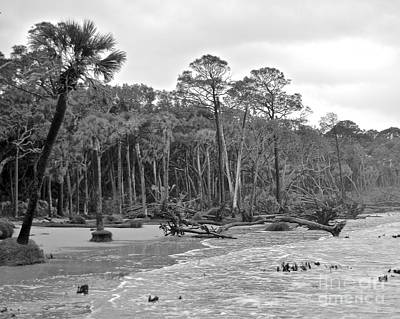 Photograph - Boneyard Beach by Carol  Bradley