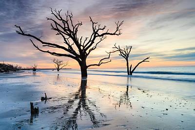 Photograph - Defiantly - Boneyard Beach Tree by Carol VanDyke