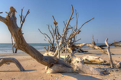 Boneyard Beach Art Print by Patricia Schaefer