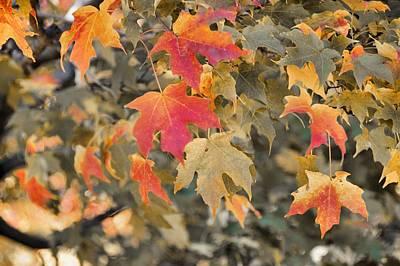 Photograph - Bonfires Of Autumn by JAMART Photography