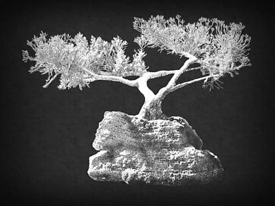 Photograph - Bonsai 1 by Frank Wilson