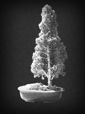 Photograph - Bonsai 2 by Frank Wilson