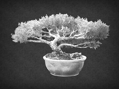 Photograph - Bonsai 3 by Frank Wilson