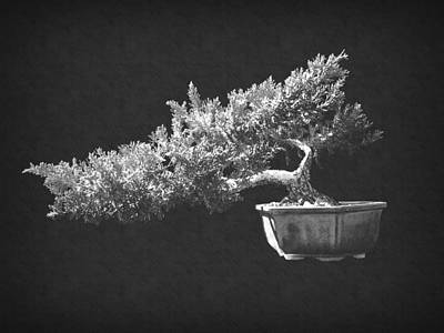 Photograph - Bonsai 4 by Frank Wilson
