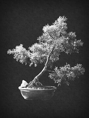 Photograph - Bonsai 5 by Frank Wilson