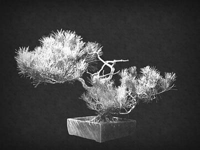Photograph - Bonsai 6 by Frank Wilson